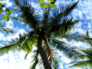 120-The-coconut-tree1