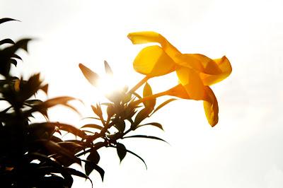 SunInFrame_Ed-181